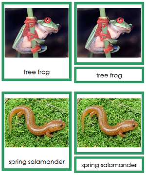 Amphibians 3-Part Cards (Animal Kingdom Cards) - Montessori Print Shop