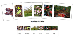 Apple Life Cycle Sequence Cards - Montessori Print Shop