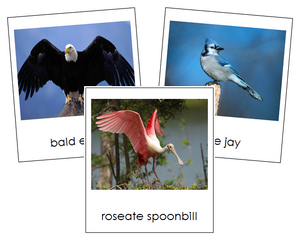Types of Birds Cards - Animal Kingdom Cards - Montessori Print Shop