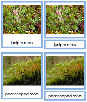 8 types of Bryophyta (mosses) - Montessori Print Shop