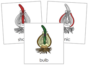 Bulb Nomenclature Cards (red) - Montessori Print Shop