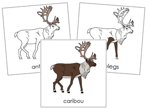 Caribou Nomenclature Cards - Montessori Print Shop