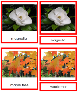 8 types of Dicotyledon (dicots) - Montessori Print Shop