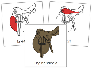 English Saddle Nomenclature Cards (red) - Montessori Print Shop