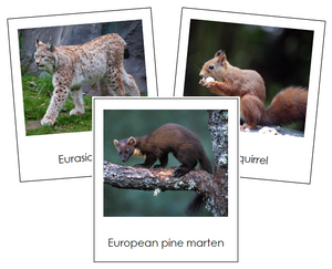 European Animals - montessori geography cards