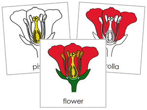 Flower Nomenclature Cards - Montessori Print Shop