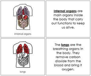 Internal Organs Nomenclature Book (red) - Montessori Print Shop