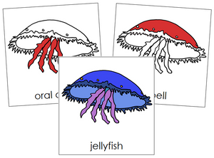 Jellyfish Nomenclature Cards (red) - Montessori Print Shop