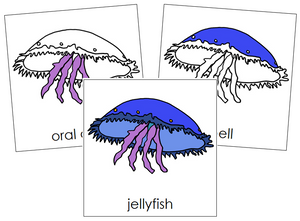 Jellyfish Nomenclature Cards - Montessori Print Shop