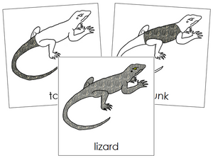 Lizard Nomenclature Cards - Montessori Print Shop