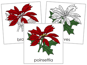 Poinsettia Nomenclature Cards - Montessori Print Shop
