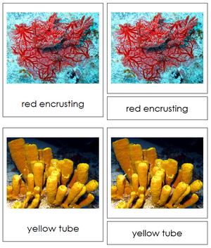 8 types of Porifera (Animal Kingdom) - Montessori Print Shop
