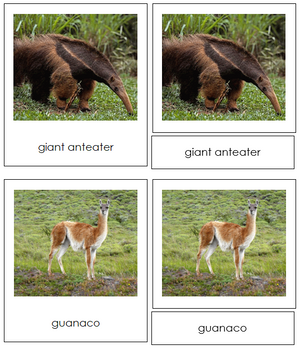 South American Animals - Montessori Print Shop