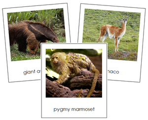 South American Animals - Montessori Continent Cards