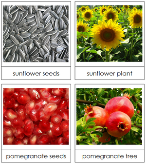 Seed & Plant Matching Cards - Montessori Print Shop