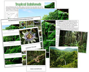 Tropical Rainforest Charts & Cards - Montessori Print Shop