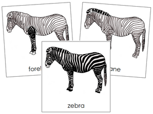 Zebra Nomenclature Cards - Montessori Print Shop