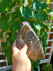 XL Deep Purple Amethyst Cluster