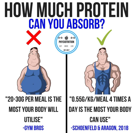 How Much Protein Can You Absorb?