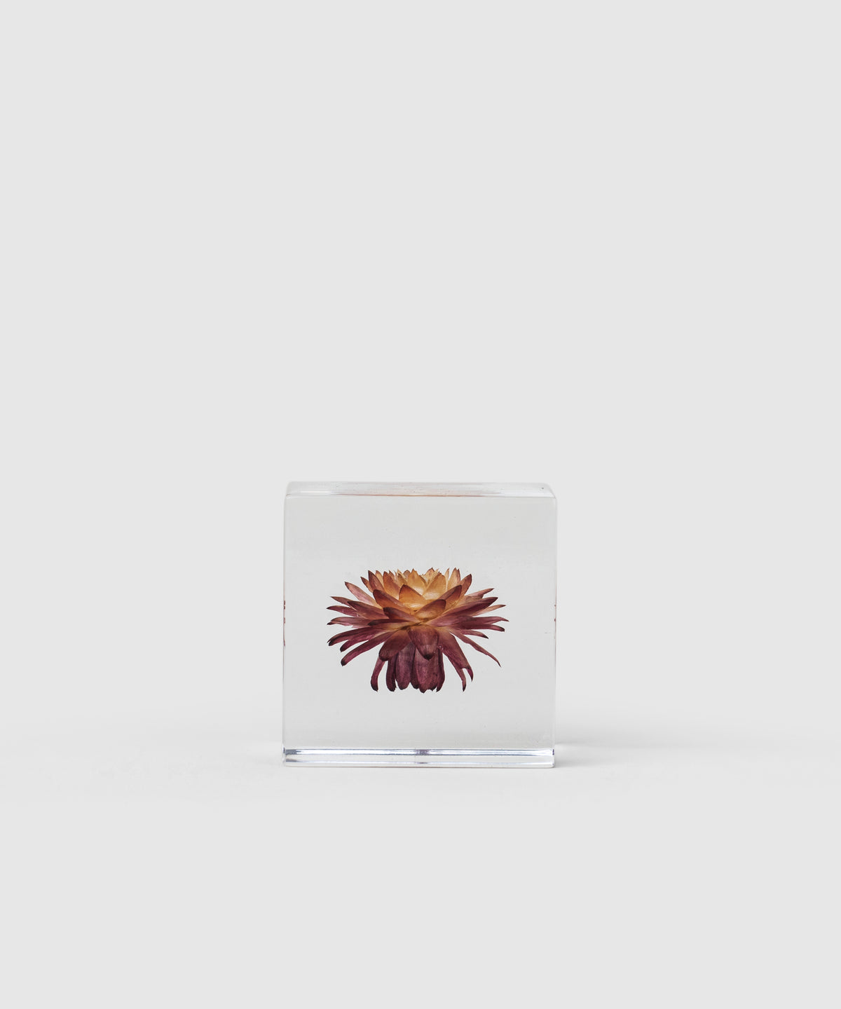 Suspended Strawflower Paperweight Cube