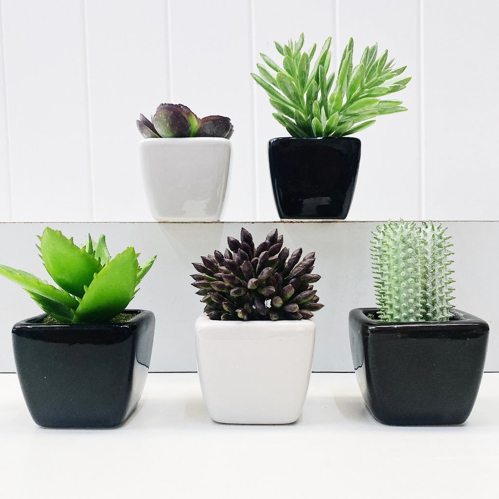 Our Mini Succulent in Black & White Pots are perfect for a little space filler or to fill that cute little pot you have at home. Available in a black or white pot.| Bliss Gifts & Homewares | Unit 8, 259 Princes Hwy Ulladulla | South Coast NSW | Online Retail Gift & Homeware Shopping | 0427795959, 44541523