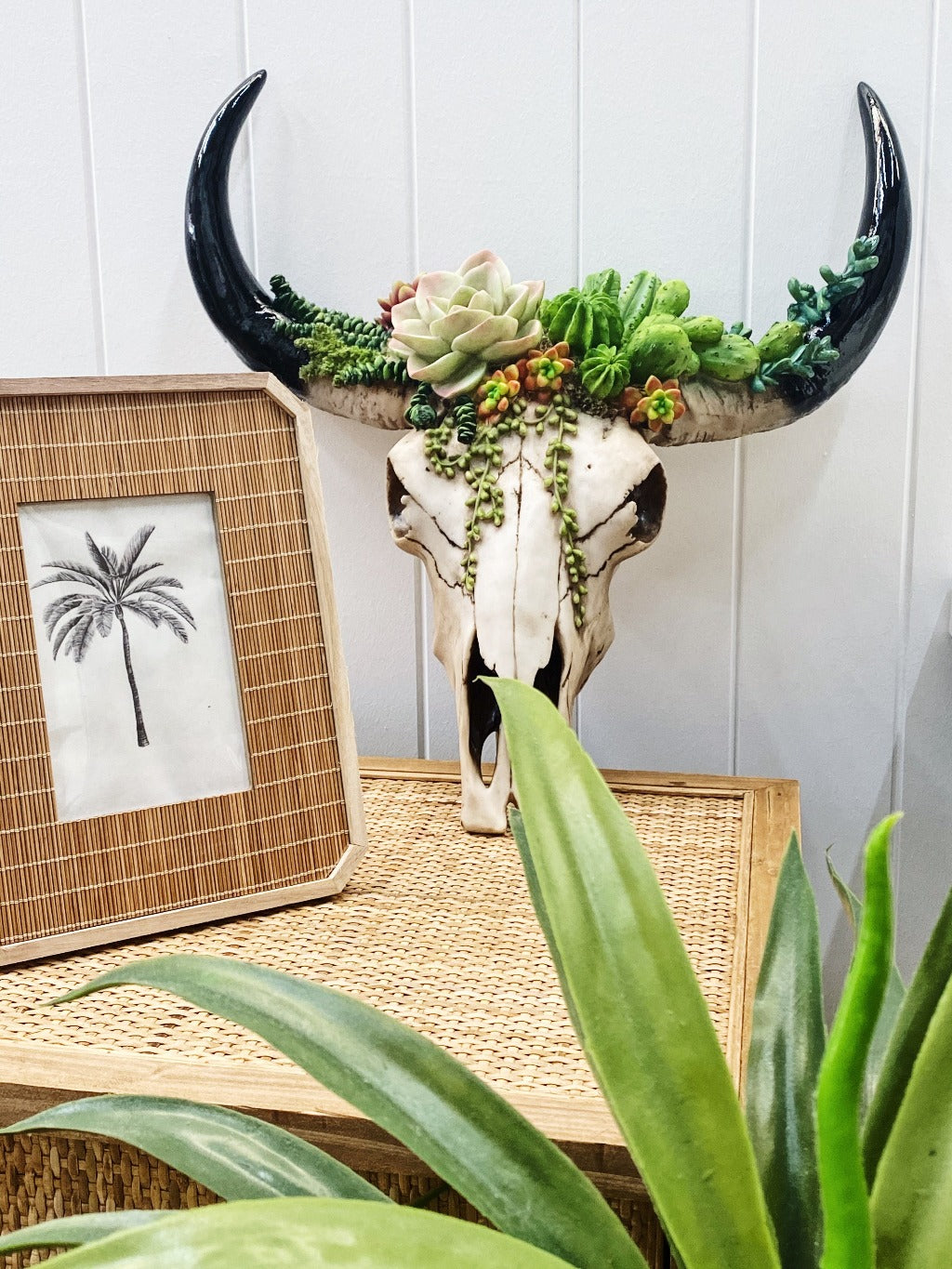 Our Succulent Cow Skull has a 3 dimensional pattern to give depth. This realistic looking sculpture is lightweight and easily wall mounted. It comes ready to hang with screws and drilling template.| Bliss Gifts & Homewares | Unit 8, 259 Princes Hwy Ulladulla | South Coast NSW | Online Retail Gift & Homeware Shopping | 0427795959, 44541523