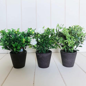 Artificial Potted Greenery | Small 19cm | Bliss Gifts & Homewares | Milton | Online & In-store | 0427795959 | Afterpay available