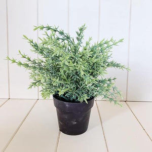 Forever Green Artificial Plants | Decorative Potted Greenery | 24cm | Bliss Gifts & Homewares | Milton | Online & In-store | 0427795959 | Afterpay available