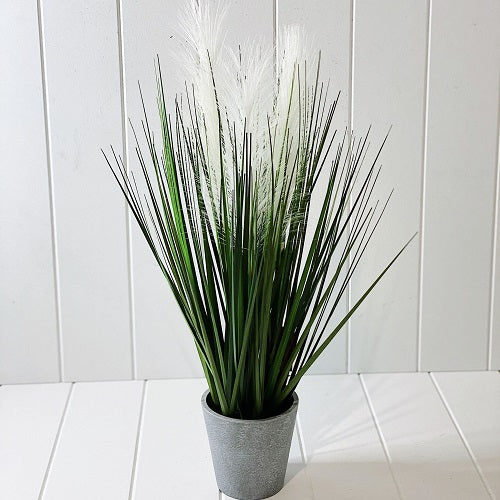 This arrangement of Native Grass in Grey Pot, containing tall stalks of grass, reminds you of being at the beach. This beautiful piece brings nature and tranquility into your home. This light and airy arrangement would do well in any room. Measures: 55cm | Bliss Gifts & Homewares | Unit 8, 259 Princes Hwy Ulladulla | South Coast NSW | Online Retail Gift & Homeware Shopping | 0427795959, 44541523