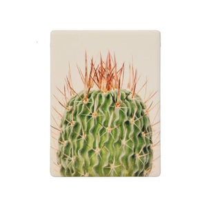 SPLOSH | Spiky Ceramic Magnet | 6.2cm x 8.2cm | Ceramic with magnetic backing | Spike cactus | Bliss Gifts & Homewares | Milton | Online & In-store | 0427795959 | Afterpay available