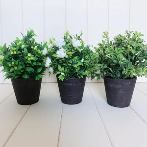 Potted Greenery - Large