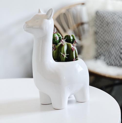 Smiling White Llama Pot | Bliss Gifts & Homewares | Milton | Online & In-store | 0427795959 | Afterpay available