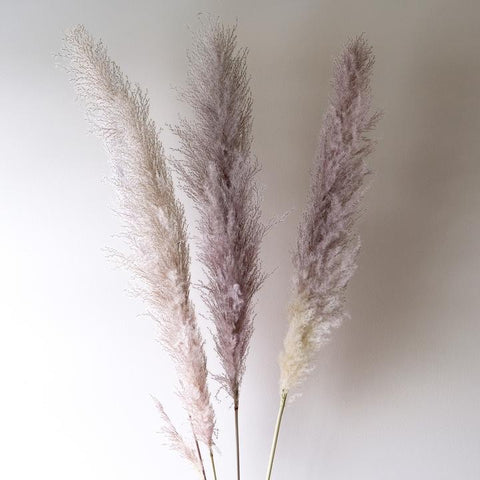 Pampas Bunch - Grey 60 inch