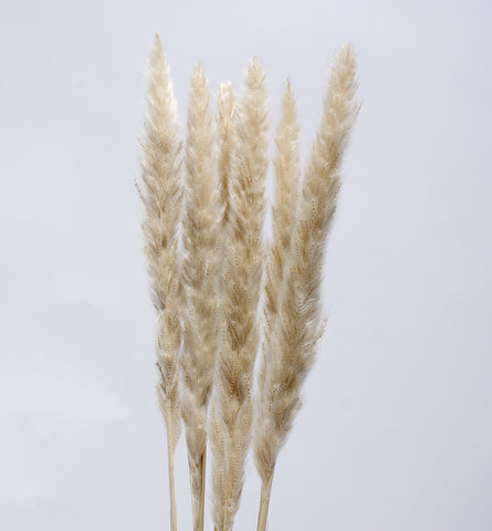 thin pampas grass spears