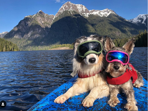 Pets Paddleboarding Canada and U.S. with Sea Gods Inflatables & Online Store
