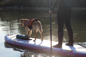 Water and Ocean with Dog and Family. Infinite Mantra 11 Inflatable Paddle Board (Yoga Inspired ISUP)