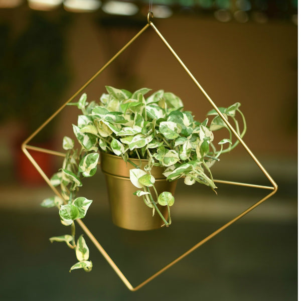 Diamond Shaped Metal Hanging Planter in Gold Finish 1 BHK Interiors