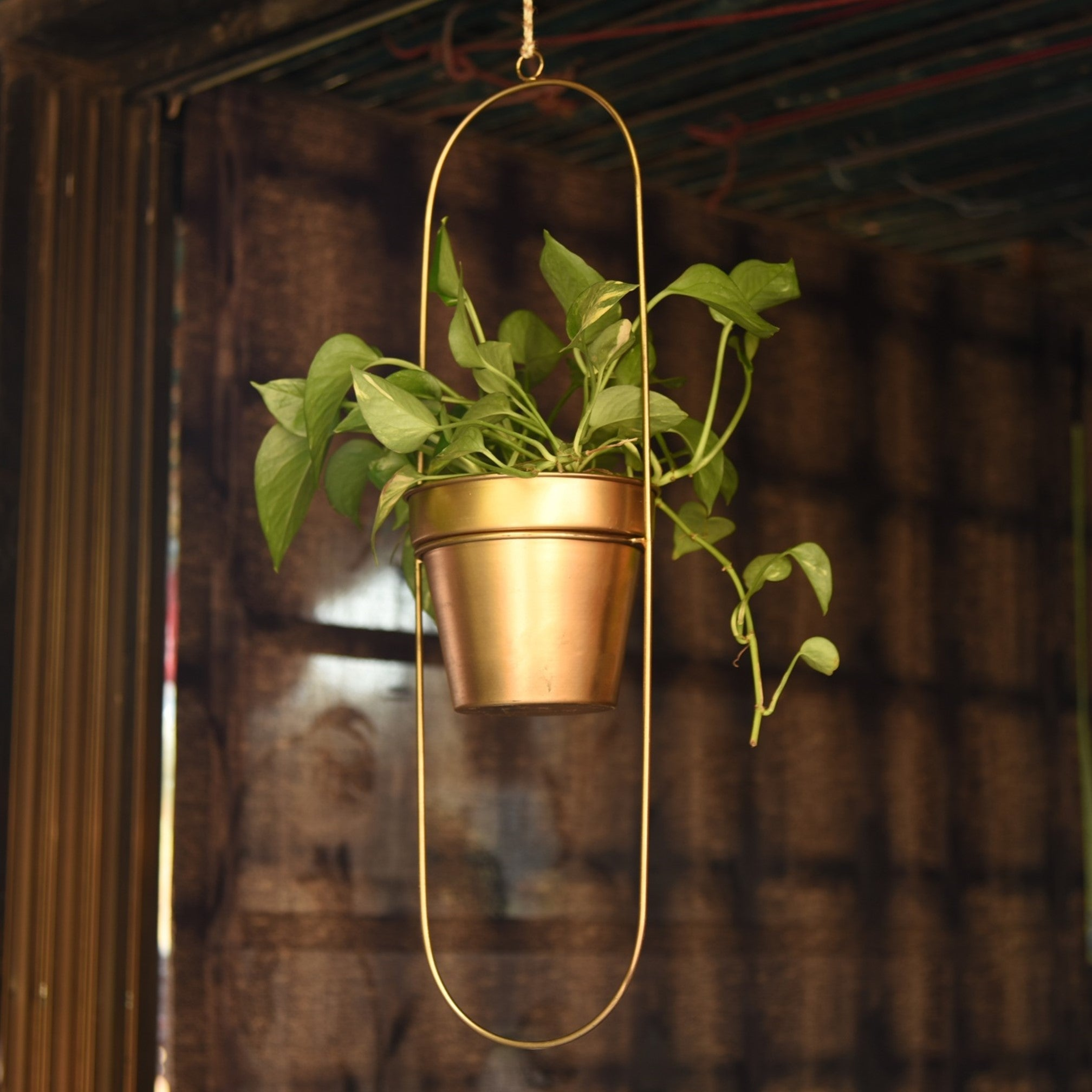 """Capsule"" Oval Shaped Hanging Metal Planter in Gold Finish 1 BHK Interiors"