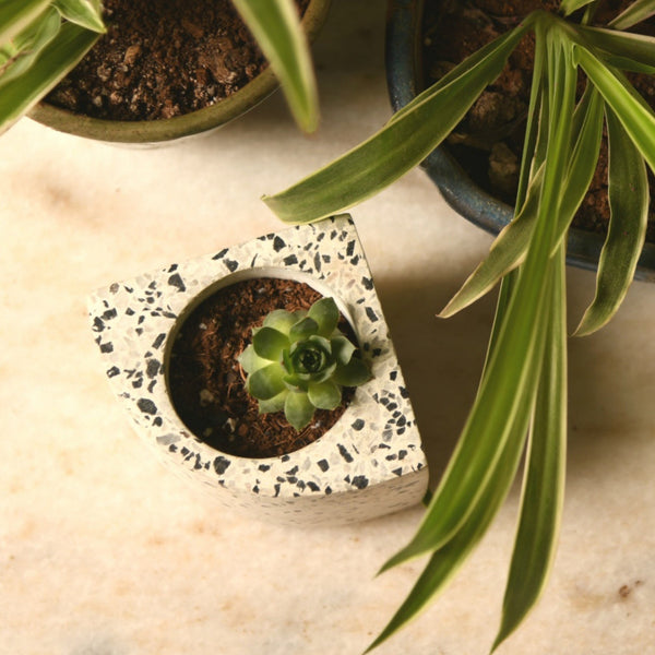 1 BHK Interiors Quarter Concrete Table Top Pot / Planters with Terrazzo Print in 4 Colours