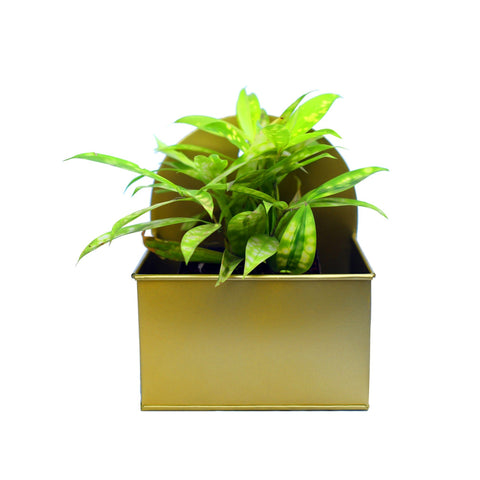 Rectangular Hanging Metal Mounted Wall Planter / Letter Box in Matte Gold Finish 1 BHK Interiors