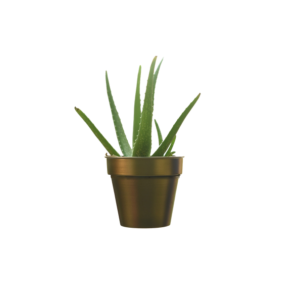 1 BHK Interiors Simple Planter/Pot in Gold Finish