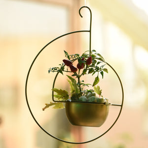 Spiral Metal Hanging Planter/Bird Feeder in Gold Finish 1 BHK Interiors