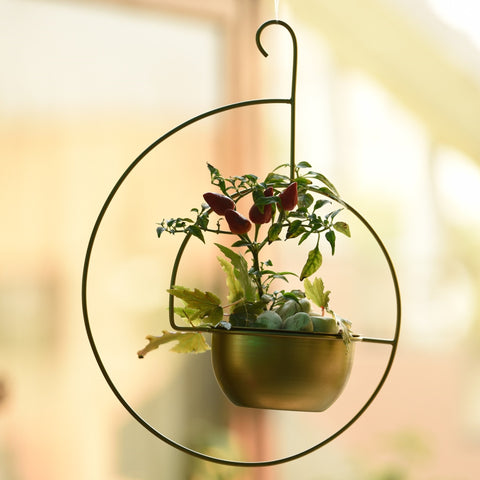 1 BHK Interiors Spiral Metal Hanging Planter/Bird Feeder in Gold Finish