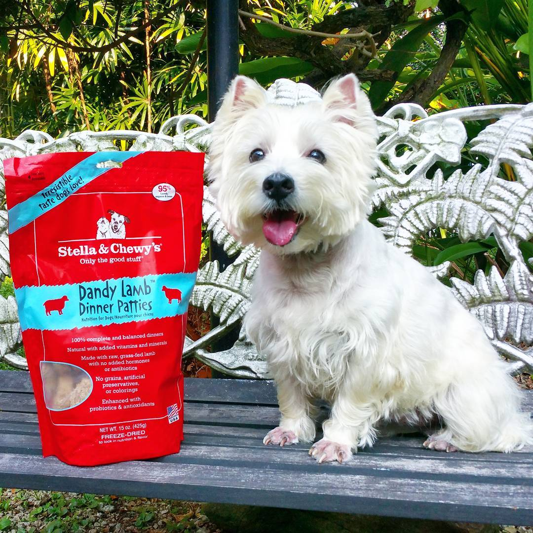 Stella & Chewy's Dog Food - Dinner Patties, The Wild Diet Your Dogs Crave!