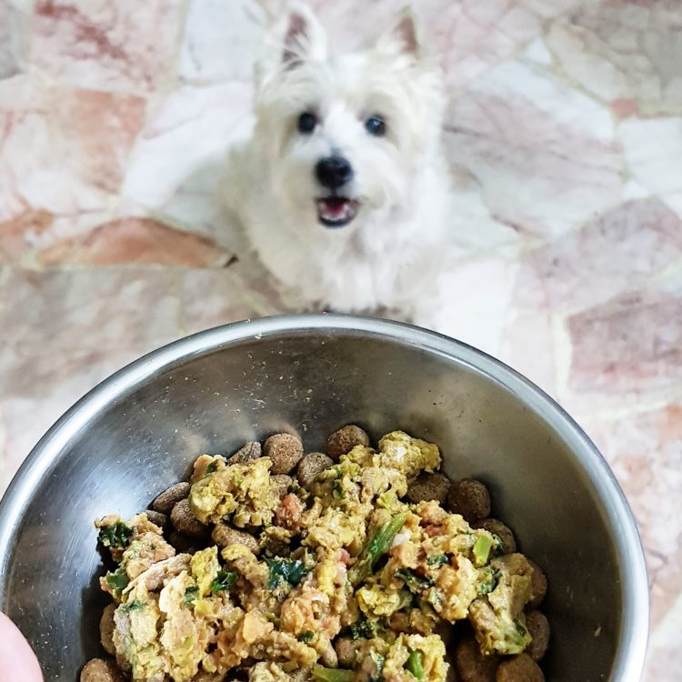 What You Should Know About Underdog Dog Food