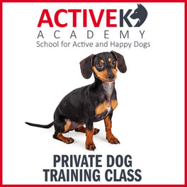 Active K9 Academy Private Dog Training Class