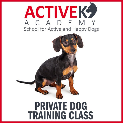Active K9 Academy Private Dog Training Class - Kohepets