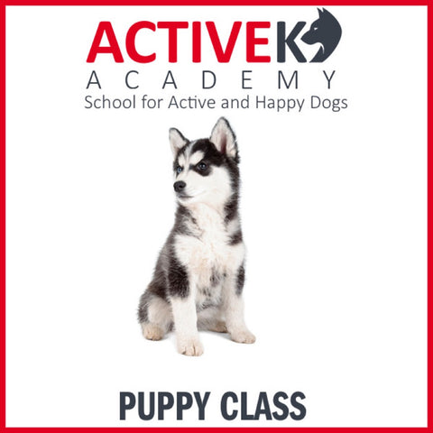 Active K9 Academy Puppy Training Group Class