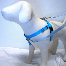 2 Hounds Design Freedom No-Pull Dog Harness - Turquoise/Silver
