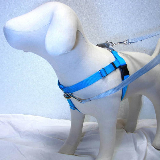 2 Hounds Design Freedom No-Pull Dog Harness - Turquoise/Silver - Kohepets